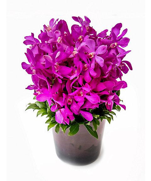 <Nicolai Bergmann Flowers & Design(Nicolai Bergmann)>【母の日】【13】【14】2016年 母の日限定 フレッシュフラワーアレンジメント(モカラ) 【14】M