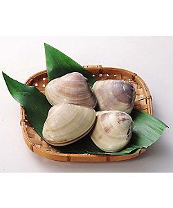 東信水産(鮮魚)/トウシンスイサン(センギョ) 【新宿】千葉県産 はまぐり