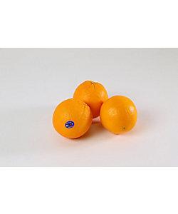 室町万弥(野菜・果実)/ムロマチマンヤ 【日本橋】ネーブルオレンジ
