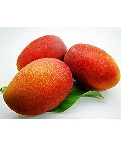 【7月届】<サン・フルーツ>沖縄県産 マンゴー