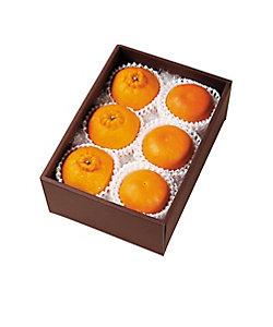 MI FOODSTYLE(野菜・フルーツ)/エムアイフードスタイル(野菜・フルーツ) ISETAN FRUITS 季節のフルーツ詰め合わせ