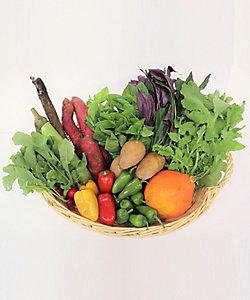 MI FOODSTYLE(野菜・フルーツ)/エムアイフードスタイル(野菜・フルーツ) <高農園>野菜ボックス