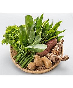 <しまんと流域野菜>しまんと流域農業セット