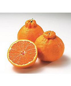 MI FOODSTYLE(野菜・フルーツ)/エムアイフードスタイル(野菜・フルーツ) 【3月届】ISETANFRUTS 和歌山県産 木熟301デコポン