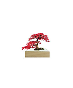 toumei/トウメイ ミニbonsai 紅葉