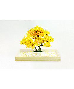toumei/トウメイ bonsai S 銀杏