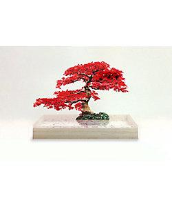 toumei/トウメイ bonsai S 紅葉